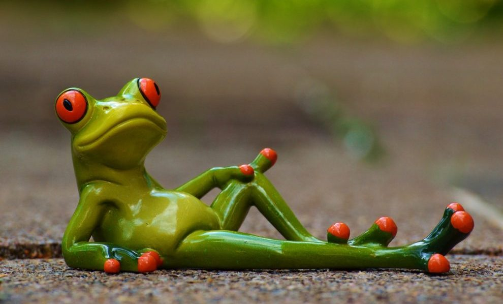 frog-lying-relaxed-cute