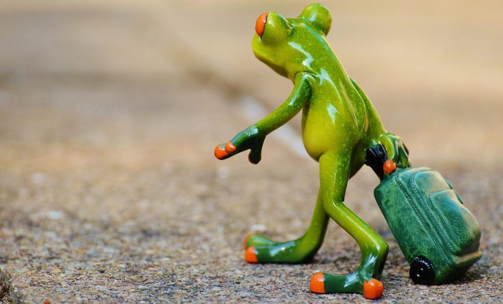 frog-farewell-travel-luggage